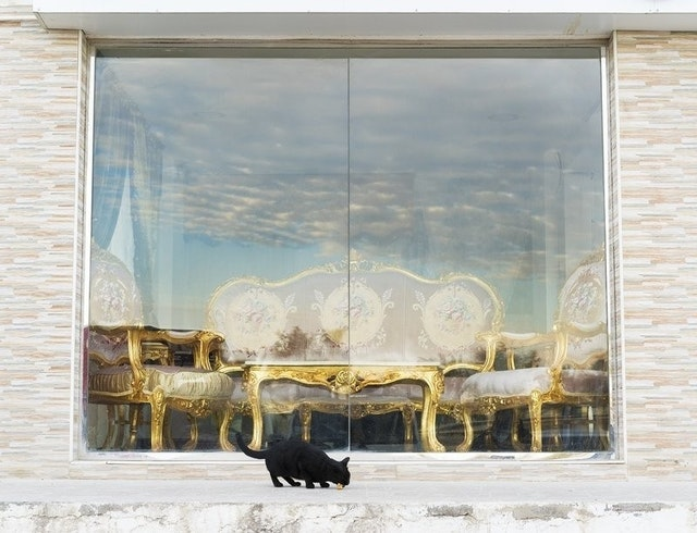 Farah Al-Qasimi, <em>Furniture Market, Stray Cat</em>, 2018. Courtesy of the artist and Helena Anrather.